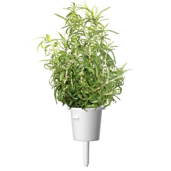 SMART HOME ROSEMARY REFILL/3PACK SGR51X3 CLICK&GROW