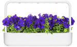 Click & Grow Smart Garden refill Blue Petunia 3pcs