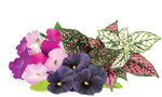 Click & Grow Plant Pod Vibrant Flower Mix 9pcs