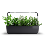 Tregren  Kitchen Garden, T12, Black, LED, 645x175x440 mm, 24 seed pods pc(s), Wi-Fi controlled, Smartphone remote support